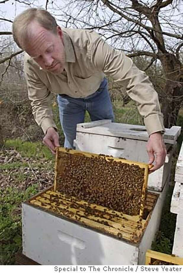 Dan Cummings talks about the Varroa destructor mite and the problems they cause with his honey bee population as he examines a hive in an almond field near his home in Chico, Calif., on Thursday, March 3, 2005.  Photo by Steve Yeater/Special to The Chronicle Photo: Steve Yeater/Special To The Chro
