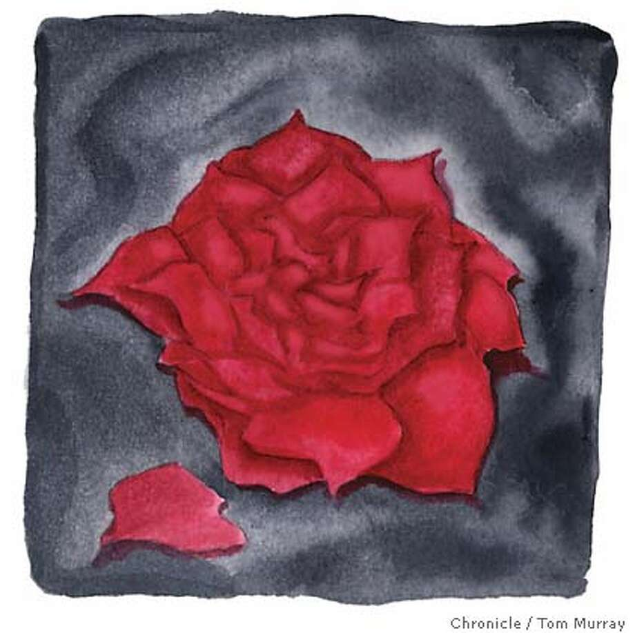 Red Rose. Chronicle illustration by Tom Murray