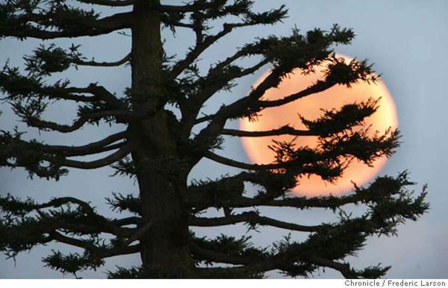 MOONSUNHYDE_003_fl.jpg March full moon set behind a California Pine viewed from the top Hyde Street. Today moon is called the Sap moon and sets at sunrise and rises at sunset. 3/25/05 San Francisco CA Frederic Larson The San Francisco Chronicle  Contest Photo: Frederic Larson