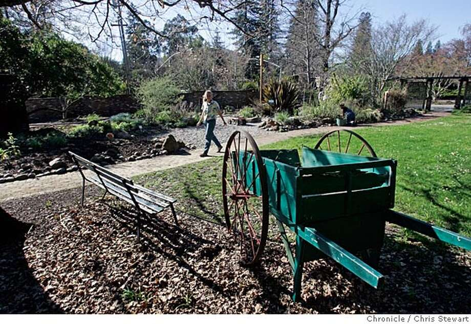 Event on 3/10/05 in Ross.  Garden and plants at the Marin Art and Garden Center, an eleven-acre historic estate in Ross for our regular Garden Walks feature. The center, at 30 Sir Francis Drake Boulevard, features a famous Southern Magnolia tree - the biggest magnolia in California.  Chris Stewart / The Chronicle Photo: Chris Stewart