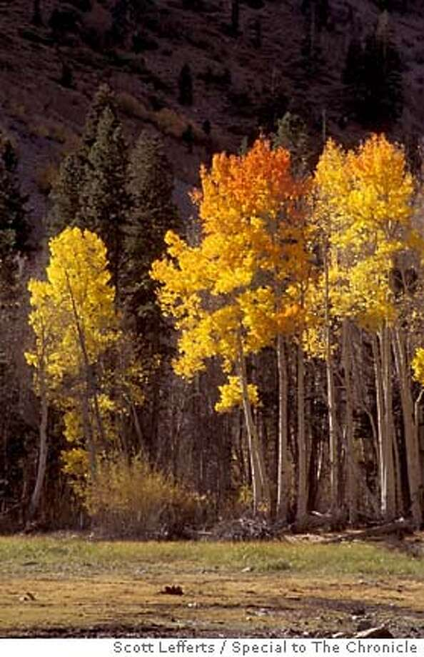 Morning light illuminates colorful trees on the shore of Lundy Lake. Scott Lefferts / Special to The Chronicle Ran on: 09-26-2004  Morning light illuminates trees on the shore of Lundy Lake in the eastern Sierra, one of the best places in California to see fall colors.
