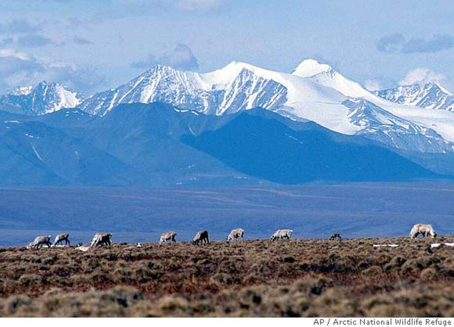 ** FILE ** In this undated photo provided by the Arctic National Wildlife Refuge, caribou graze on a section of the Arctic National Wildlife Refuge in Alaska. The U.S. Senate on Wednesday, March 16, 2005, voted to open the Alaska wildlife refuge to oil drilling. (AP Photo/Arctic National Wildlife Refuge, File)