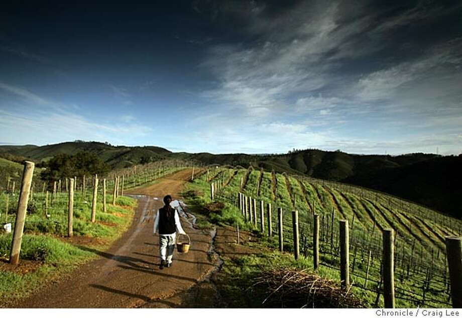 KULETO17_049_cl.JPG  Story on restaurant designer Pat Kuleto and his personal chef, Janelle Weaver, up at his Kuleto Family Wine Estate in St. Helena. Photo of Janelle Weaver taking her routine 3.5 mile walk around the vineyard before she picks her vegetables in the garden. That is what the basket is for she is carrying. Event on 3/1/05 in St. Helena. Craig Lee / The Chronicle MANDATORY CREDIT FOR PHOTOG AND SF CHRONICLE/ -MAGS OUT Photo: Craig Lee