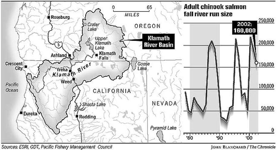 Salmon. Chronicle graphic by John Blanchard
