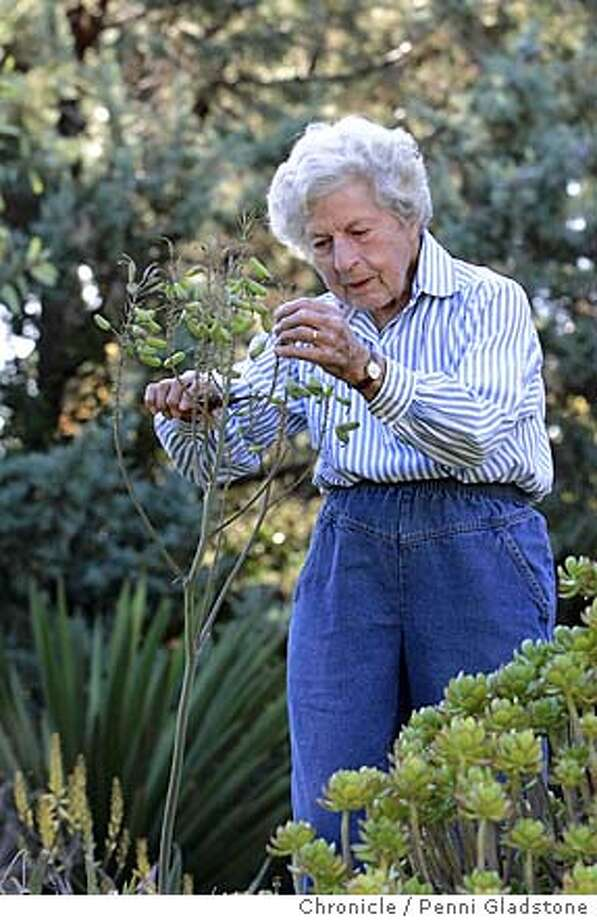 on a cool morning, RUTH Bancroft tends to her garden with clippers in hand. She cuts back the part of the plant which has throw shoots of seeds.  9/14/04 in Walnut Creek. Penni Gladstone / The Chronicle Photo: Penni Gladstone