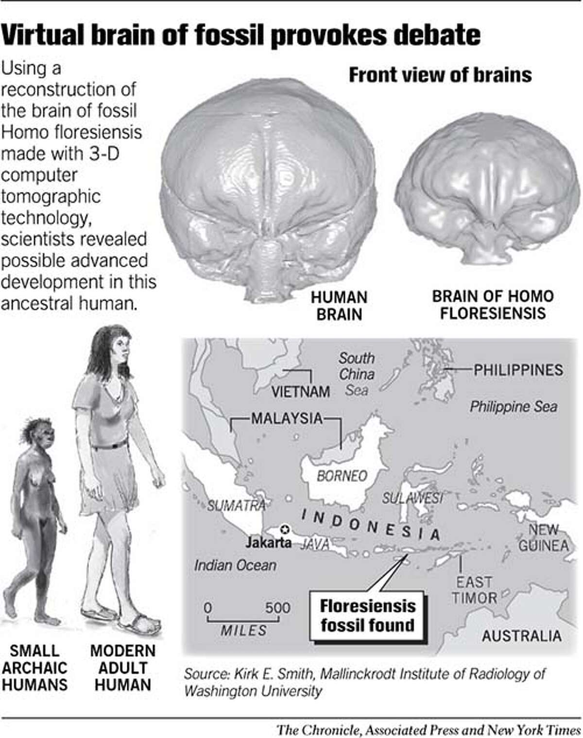 Virtual Brain of Fossil Provokes Debate. Chronicle Graphic