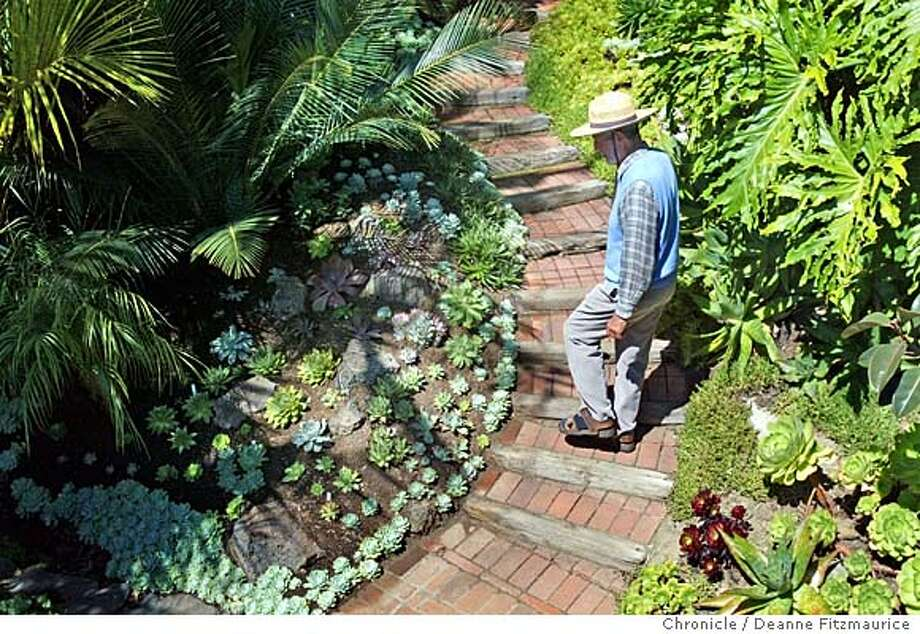 Don Worth walks through his Mill Valley garden which is filled with succulents and other plants. This was shot in Mill Valley.  Deanne Fitzmaurice / The Chronicle Photo: Deanne Fitzmaurice