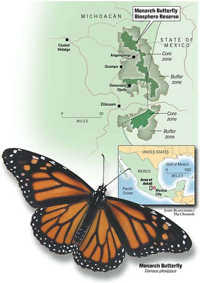 Monarch Butterfly Biosphere Reserve. Chronicle graphic by John Blanchard Photo: John Blanchard