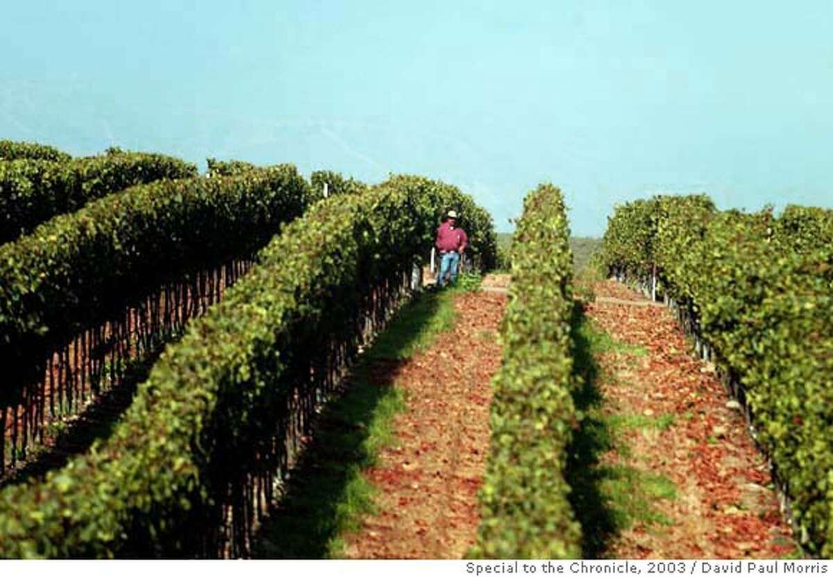 Mondavi vineyards in Soledad. Photo by David Paul Morris, special to the Chronicle, 2003