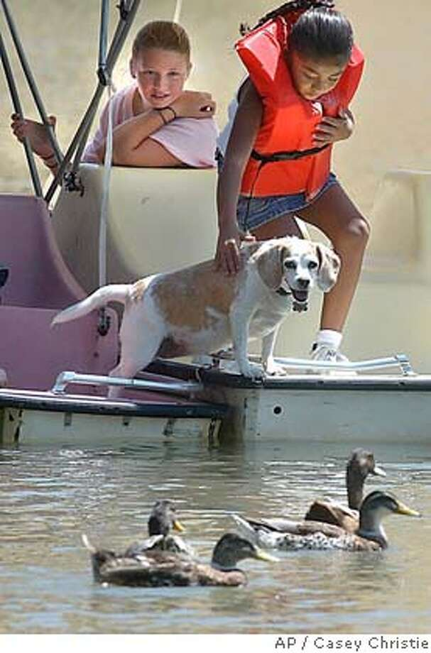 Lorena Ramirez makes sure that her friend's dog, Luckydog, stays on the paddle boats as ducks swim past Tuesday, Aug. 17, 2004, in Hart Lake in Bakersfield, Calif., while Kelsey Wainwright, left, watches. Several family members of both girls were spending time on the lake. (AP Photo/The Bakersfield Californian, Casey Christie) MANDATORY CREDIT, MAGS OUT, Photo: CASEY CHRISTIE