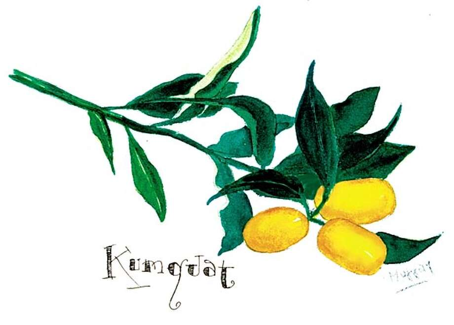 kumquats, really Photo: Tom Murray