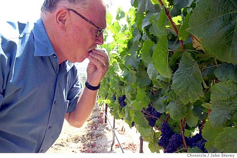 "taz234_jrs.jpg  Story about viticulturist Bob ""Taz"" Steinhauer, and the wine brand that Beringer is naming after him. Bob tastes Pinot Noir grapes in the North Canyon Vineyard.  8/1/03 in Santa Maria. JOHN STOREY / The Chronicle Ran on: 09-30-2004  Bob Steinhauer of Beringer Blass Wine Estates was named Wine Grower of the Year by Copia. Photo: JOHN STOREY"