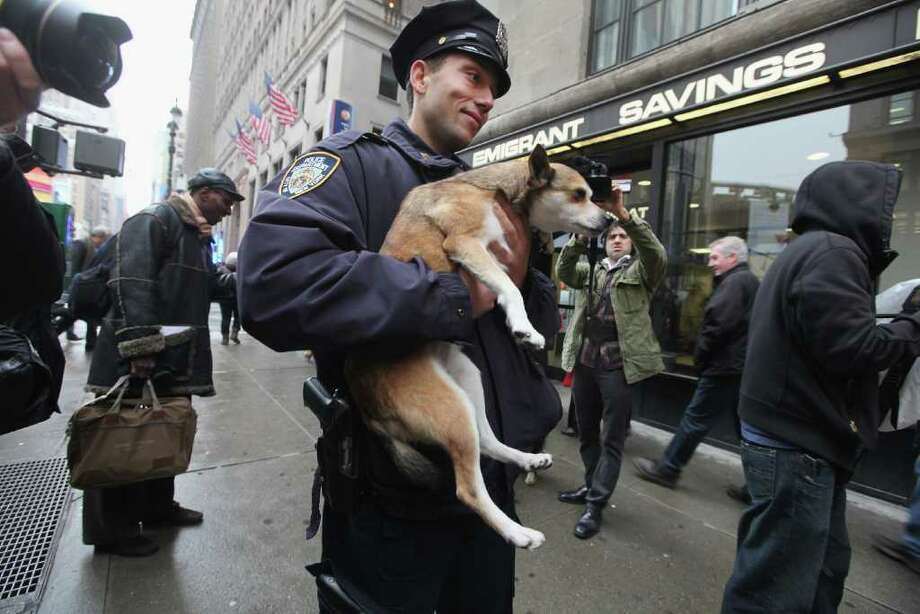 NYPD officer Danny Purnavel holds Eowyn, a six-year-old Norwegian Lundehund, during the 136th annual Westinster Kennel Club Dog Show preview on January 26, 2012 in New York City. The show, which runs February 13-14, previewed six new breeds who will compete in the show for the first time. Photo: Mario Tama, Getty Images / 2012 Getty Images