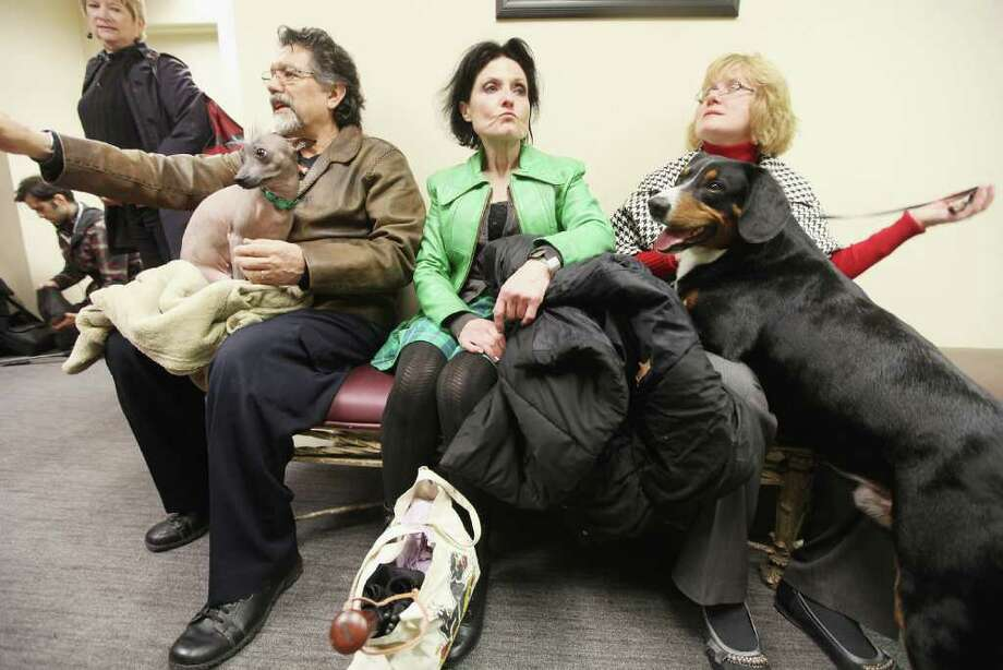 Alma (L), a Xoloitzcuintili breed, and Hoss (R), an Entlebucher Mountain Dog, wait for a press conference to start at the Westminster Kennel Club's 136th Annual Dog Show preview on January 26, 2012 in New York City. The show previewed six dog breeds who will participate in the competition for the first time this year which occurs February 13-14. Photo: Mario Tama, Getty Images / 2012 Getty Images