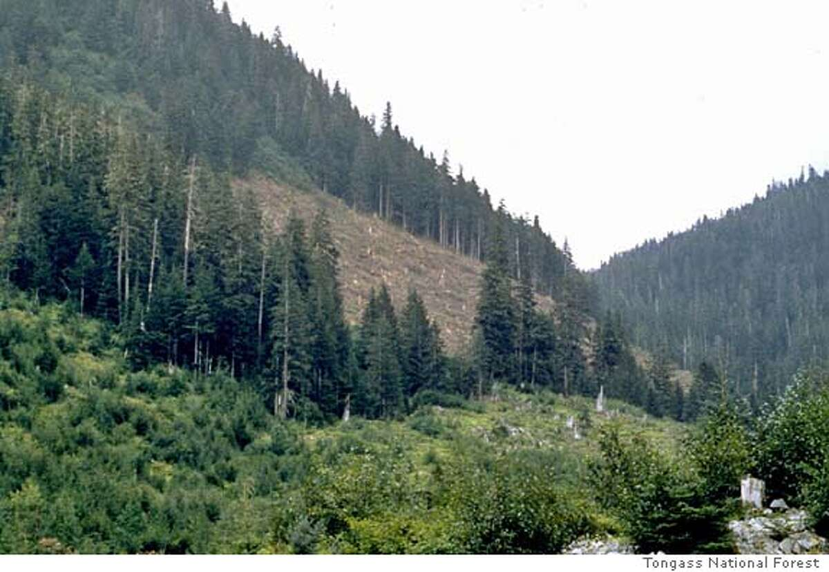 ** FILE **A section of the Tongass National Forest in Southeast Alaska is shown in this undated photo. Pacific Northwest conservationists are decrying the Bush administration proposal, announced by Agriculture Secretary Ann Veneman, Monday, July 12, 2004, that will let governors decide whether to seek protection of roadless national forest land, calling it a backhanded move to openup more areas for logging and mining. (AP Photo/U.S. Forest Service, File) HANDOUT PHOTO DATE UKNOWN [[00000000]] Ran on: 07-13-2004 The Tongass National Forest in southeast Alaska will be affected by the new rule.