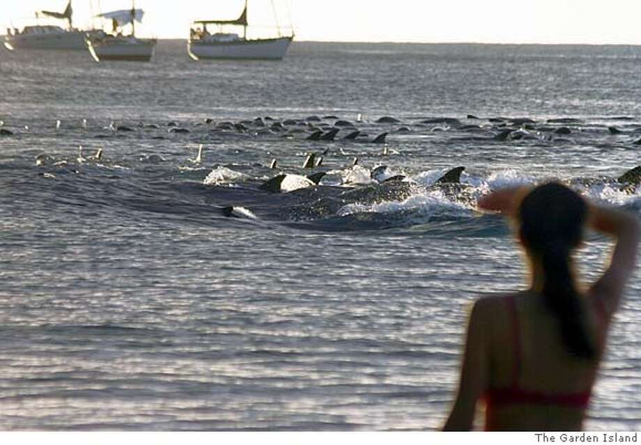 Dennis Fujimoto / The Garden Island  A beach-goer watches as the pod of melon headed whales exhibit some behavior late Saturday afternoon in Hanalei Bay.