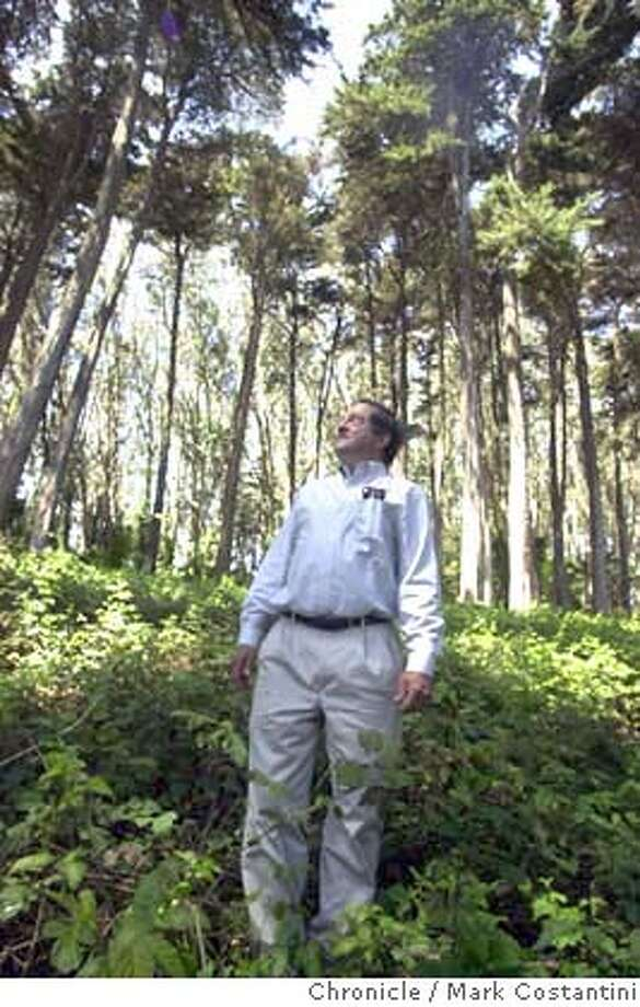 PRESIDIOTREES_008.JPG Photo taken on 5/18/04 in SAN FRANCISCO.  Peter Erlich, head forrester at the Presidio among old trees there. He's in the proccess of removing some of the old trees there and replanting new ones. Photo: Mark Costantini/SF Chronicle Photo: MARK COSTANTINI