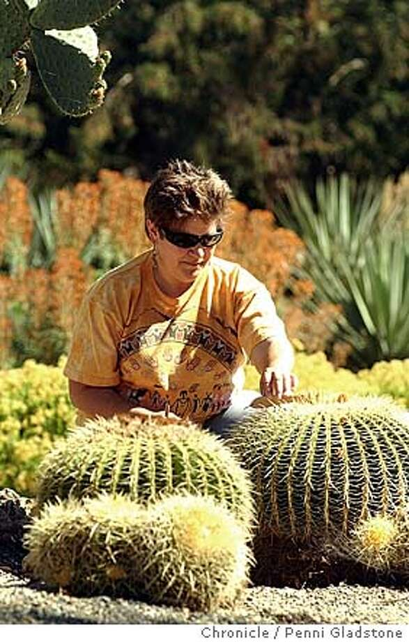 JOYCE23_063_pg.jpg Julie Cain, a volunteer cleans leaves around a golden barrel. Story is Garden Walks, about Stanford's cactus garden, the Arizona Garden, which has been recently rejuvenated. Event on 6/7/04 in Palo Alto.  Penni Gladstone / The Chronicle MANDATORY CREDIT FOR PHOTOG AND SF CHRONICLE/ -MAGS OUT Photo: Penni Gladstone
