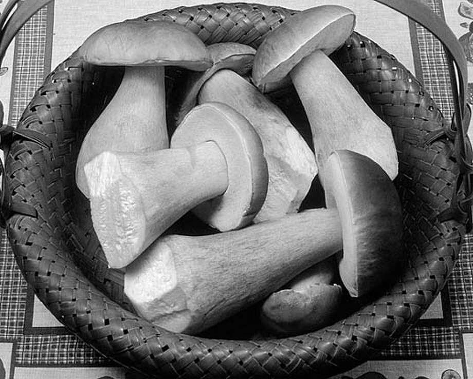 Basket o'shrooms: Boletes (Boletus edulis) are the most common and most edible mushroom. Photo courtesy of Taylor F. Lockwood