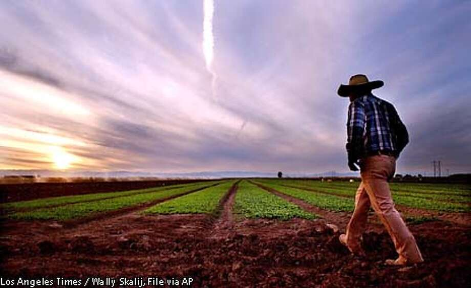 ** FILE **Imperial Valley farm owner Filemon Ragalado checks his crops in El Centro, Calif., Dec. 5, 2002. Imperial Valley water officials are poised to vote on whether to approve a billion dollar-water transfer from desert farms to fast-growing San Diego--the largest sale of its kind in the nation's history. (AP Photo/Los Angeles Times, Wally Skalij, File) Photo: WALLY SKALIJ