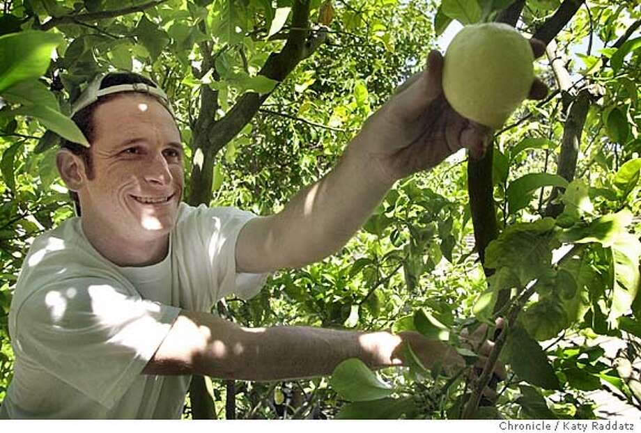 SHOWN: Scott Burger, a volunteer from Congregation Beth-Am, reaches for a Eureka lemon in a tree in Palo Alto. Story about nonprofits that grow or harvest food to distribute to needy. This outfit is Village Harvest, which harvests from backyard fruit trees. Shoot date is 5/23/04; writer is Judy Richter for HOME. Katy Raddatz / The Chronicle Photo: Katy Raddatz