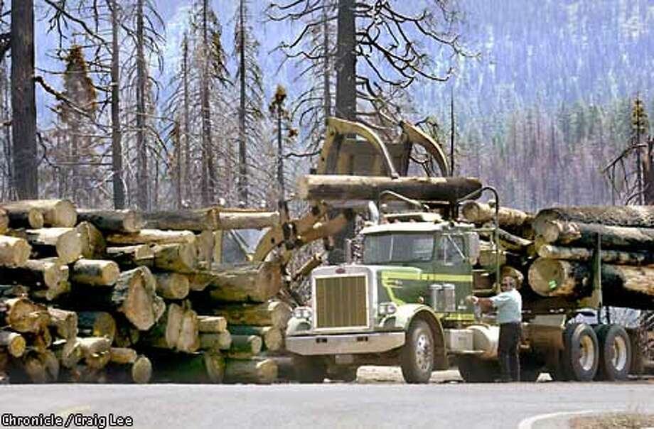 A logging operation removes partially burned timber in Duncan Canyon within the Tahoe National Forest this year. The Bush administration is pushing new rules it says will allow federal forest managers to harvest timber in such cases as burned forests and thinning for fire control. Critics fear that the rules will accelerate timber harvests in national forests by weakening wildlife protections. Chronicle photo by Craig Lee