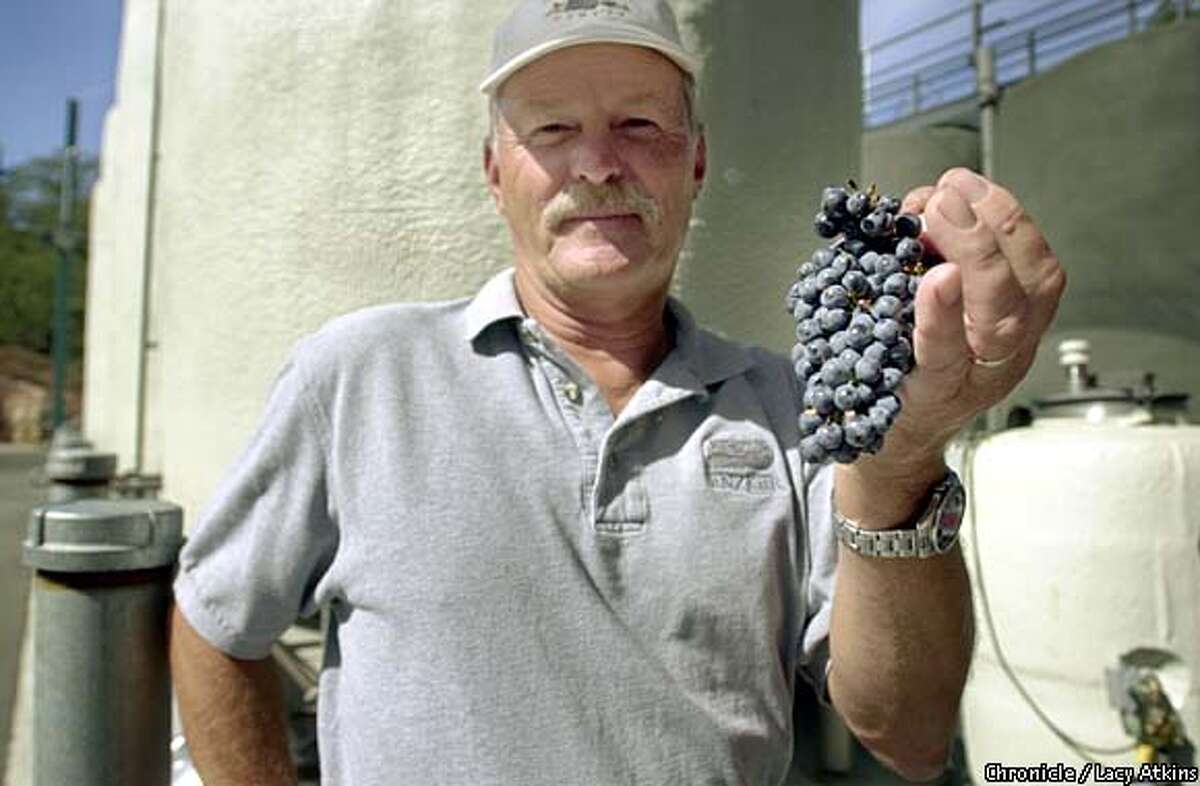 Vineyard educational director, Mike Barbitta, shows off a cluster of Syrah. Chronicle photo by Lacy Atkins