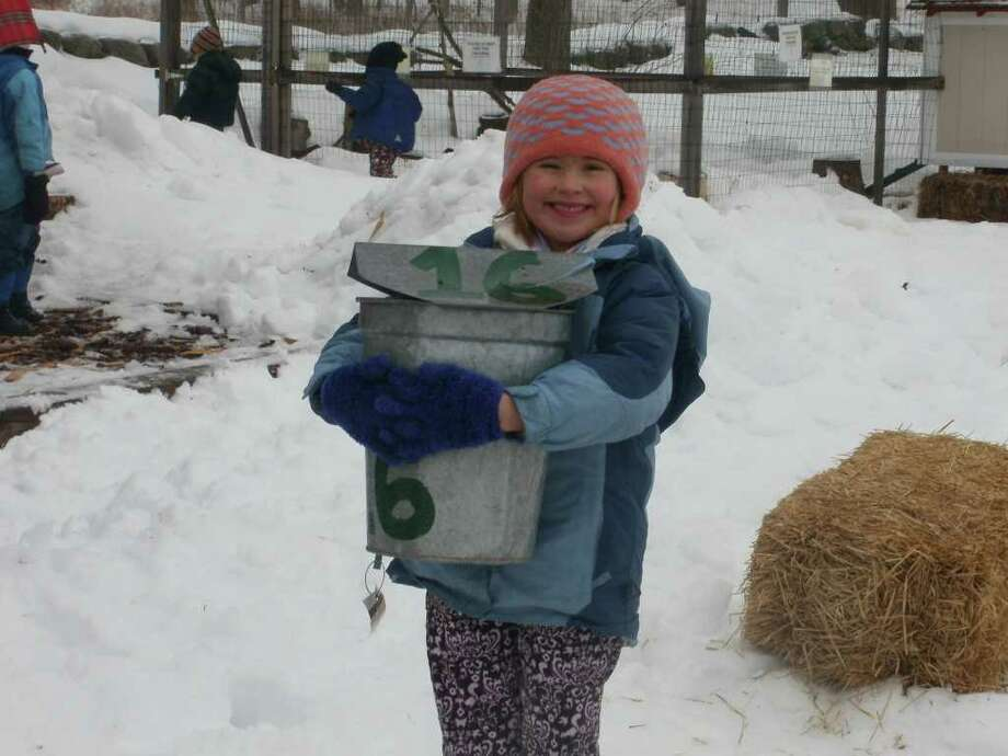 """New Canaan Nature Center will host """"Maple Syruping"""" events next month. Photo: Contributed Photo"""