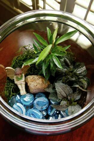 Buchanan's Native Plants Sandy Lee's magical terrarium scene includes blue glass rocks representing water, a garden fairy, a rock, moss, a tiny weeping fig and pileas. Photo: John Everett / John Everett