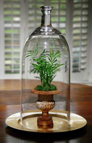 A small parlor palm is in the spotlight beneath this tall cloche. The gold charger prevents terrarium moisture from damaging the wood table. Photo: John Everett / John Everett
