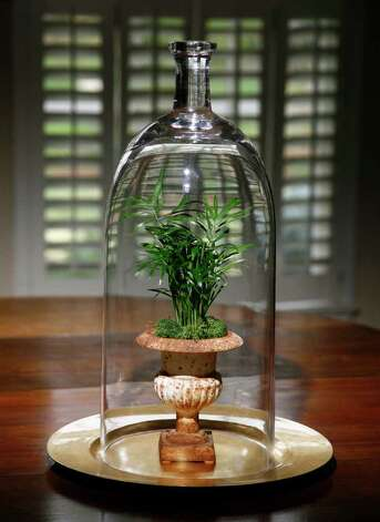 Above, a terrarium sets a magical scene. Left, a small palm is in the spotlight beneath a tall cloche. At top, a polka-dot plant, small fern and reindeer moss cozy up in a Wardian case. Photo: John Everett / John Everett