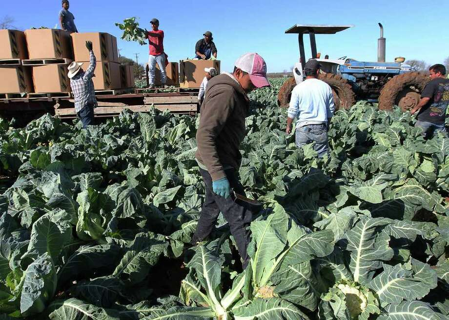 Few people put a face on the laborers who harvest the food we eat. Three books do, says Esther Cepeda. Photo: Kin Man Hui, San Antonio Express-News / San Antonio Express-News