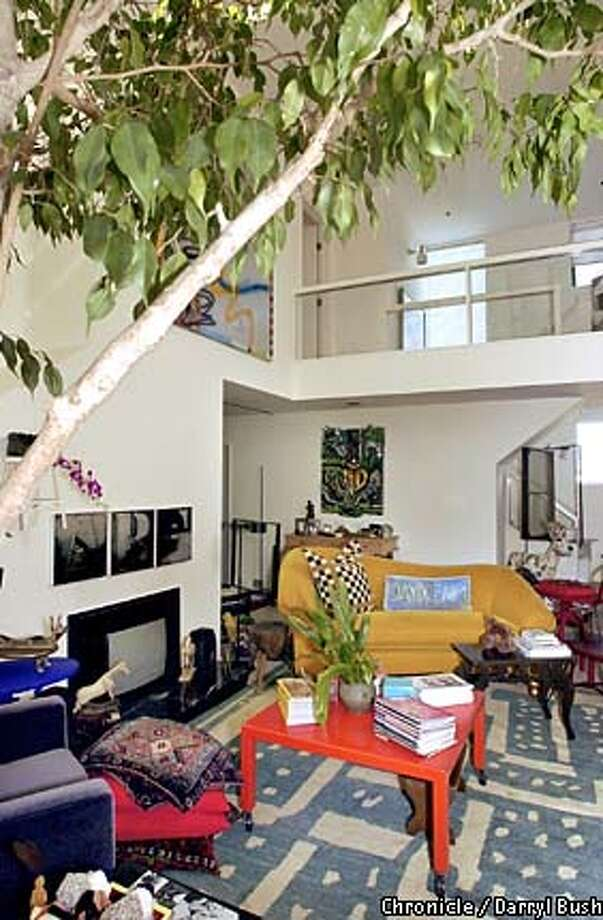 A ficus tree dominates Agnes Bourne's art-filled living room. Chronicle photo by Darryl Bush