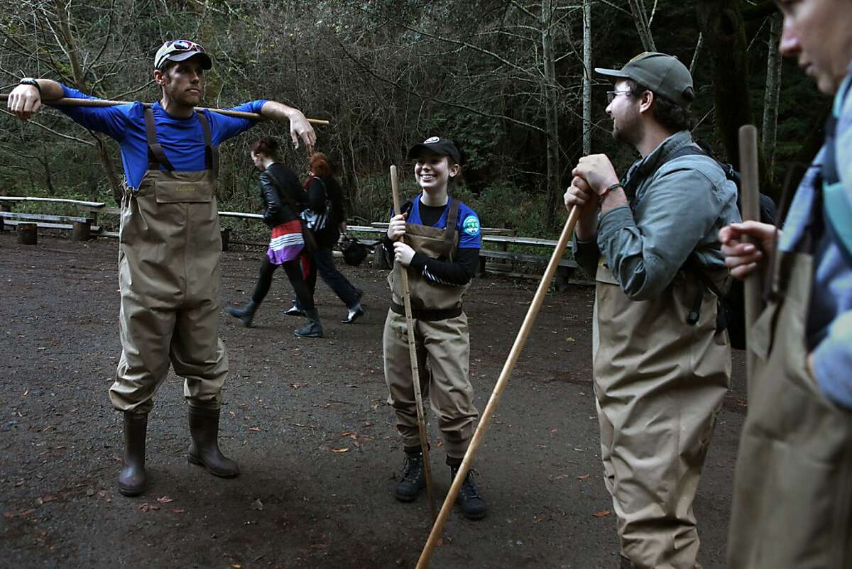 Left to right--Patrick Blanched from the Golden Gate Parks Conservancy, Emi Bauman from AmeriCorps, Ben Atencio from Pt Reyes National Seashore Association, and Megan Langhals from AmeriCorps after taking a fish count in the creeks of Muir Woods in Mill Valley, Calif., on Wednesday, January 25, 2012.