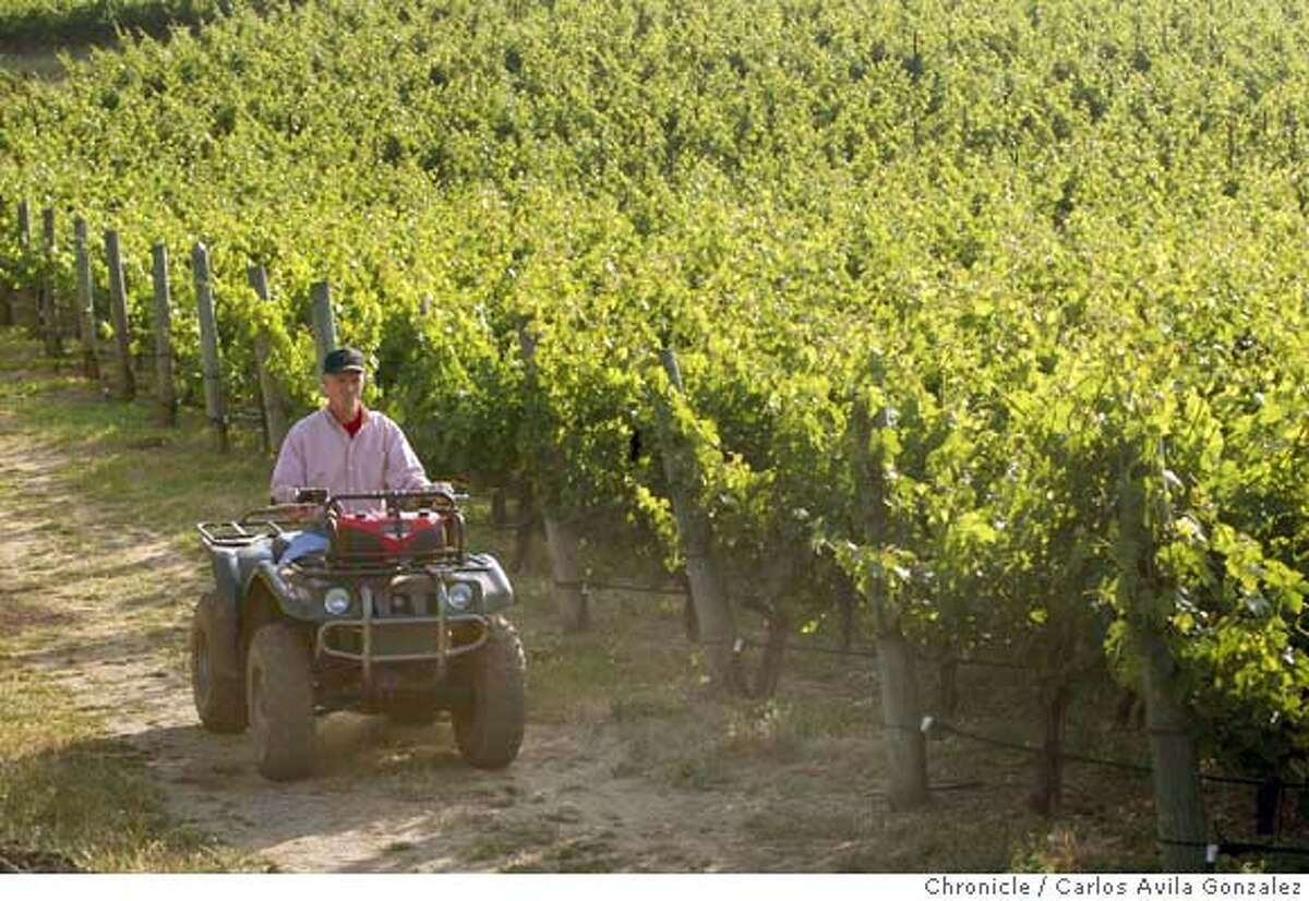 Patrick Campbell, owner of Laurel Glen Winery, looks over Cabernet grapes in his Glen Ellen vineyard on Monday, May 24, 2004. The U.S. Supreme Court agreed to hear the case on wineries' abilities to ship wines to consumers, across state lines: Campbell is a small boutique producer who would see his business enhanced - or threatened - if the Court determines sometime next year whether states can control the shipment of alcohol across their borders. If the Court rules for the states, it could spell the end of direct wine shipping in all states. Campbell has been an outspoken supporter of allowing direct shipments. Photo taken on mm/dd/yy, in San Francisco, Ca. Photo by Carlos Avila Gonzalez/The San Francisco Chronicle