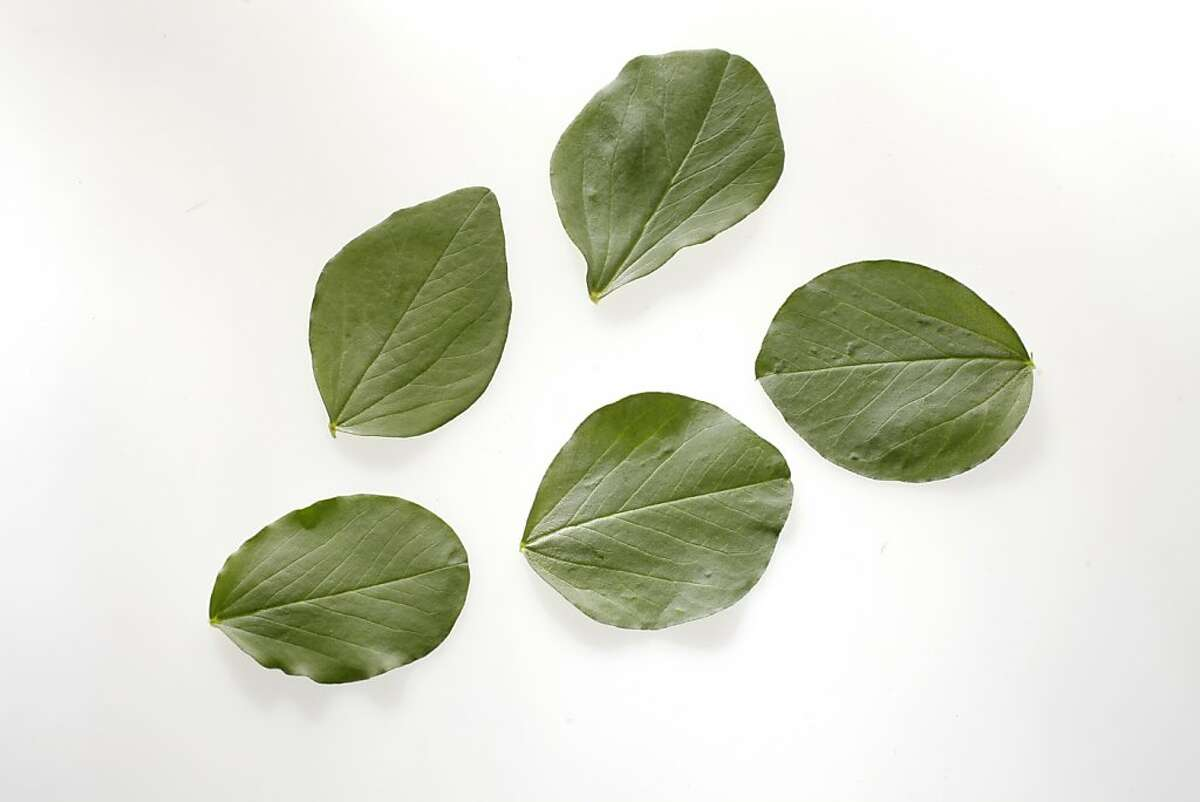 Fava Leaves are best picked when young and will have a velvety appearance.
