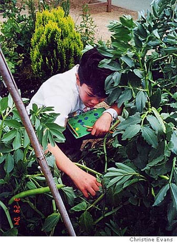 Fourth grader Jack Beckwith tending to his beans. Credit Christine Evans