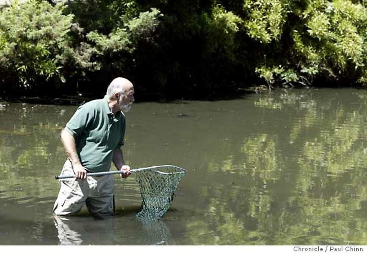 Armed with two nets, Eric Mills wades out into the Lily Pond at Golden Gate Park in search of an African clawed frog on 4/29/04 in San Francisco. PAUL CHINN/The Chronicle