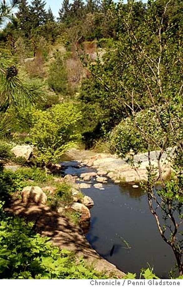 a creek runs thru the garden quarryhill botanical garden event on 329 - Quarryhill Botanical Garden