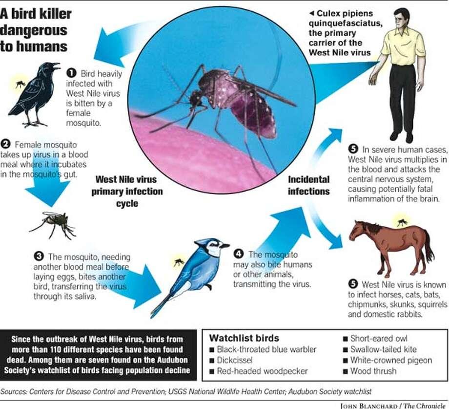 Bird Killer Dangerous to Humans. Chronicle graphic by John Blanchard Photo: John Blanchard