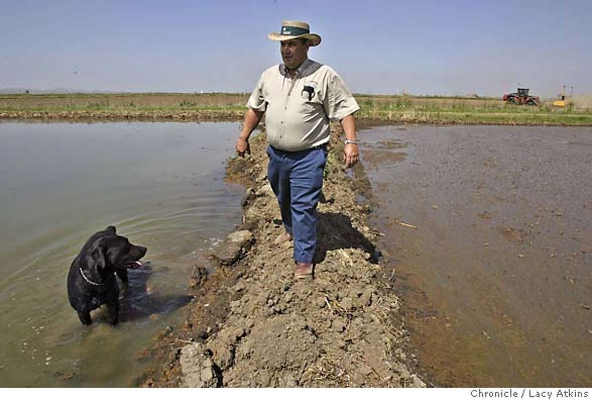 Joe Carrancho walks between flooded rice fields in Glenn County, April 5, 2004. Rice farmers state their views of the California Rice Commission approving a plan to plant genetically engineered rice, at their farms in Glenn County, April 6, 2004. LACY ATKINS / The Chronicle