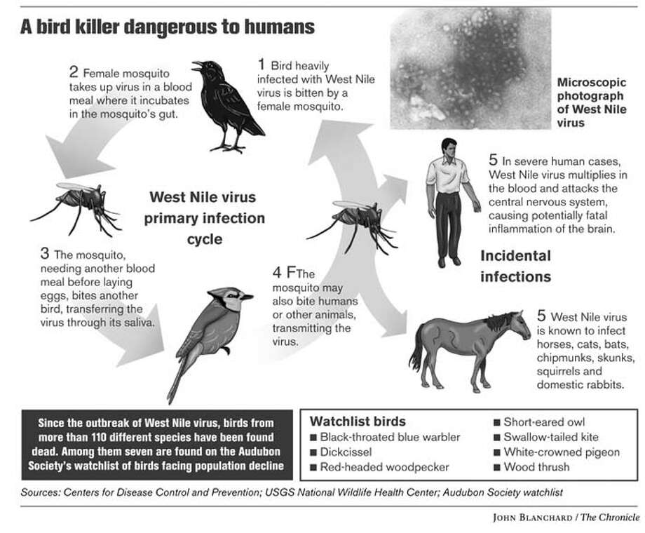 West Nile Virus. Chronicle graphic by John Blanchard