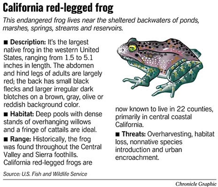 Red-Legged Frog. Chronicle Graphic
