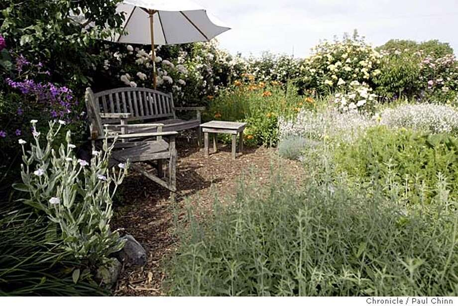 Patio furniture is surrounded by the lush environment at Anni Jensen's garden. Anni Jensen's fruit and vegetable garden in Richmond on 5/6/04. PAUL CHINN/The Chronicle Photo: PAUL CHINN