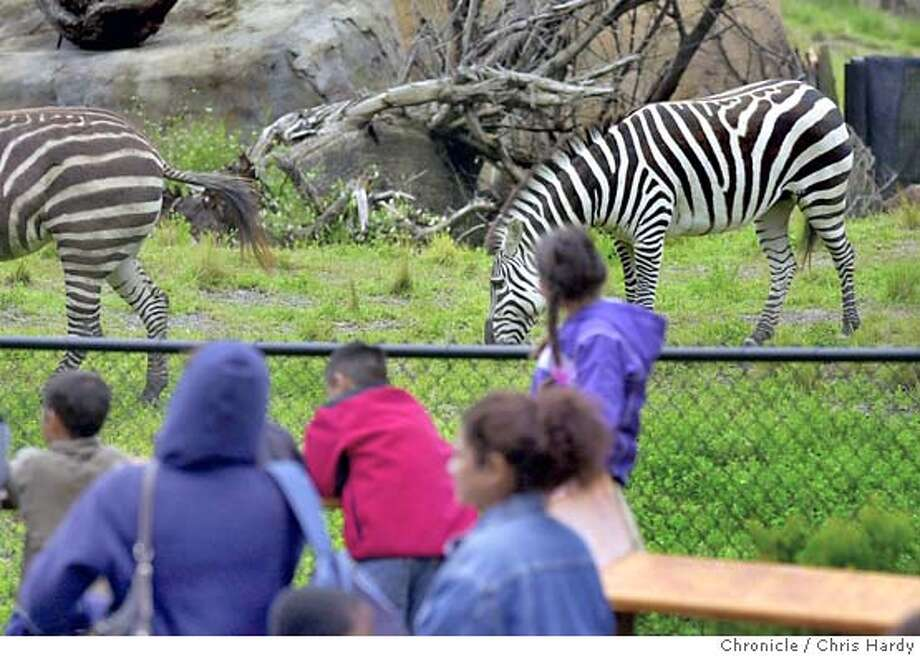 "media/vip preview of the ""african savanna"" at sf zoo, a new 3-acre habitat with kudus,zebras, giraffes, etc. opens to public saturday.  at San Francisco,CA on 5/27/04  San Francisco Chronicle/Chris Hardy Photo: Chris Hardy"