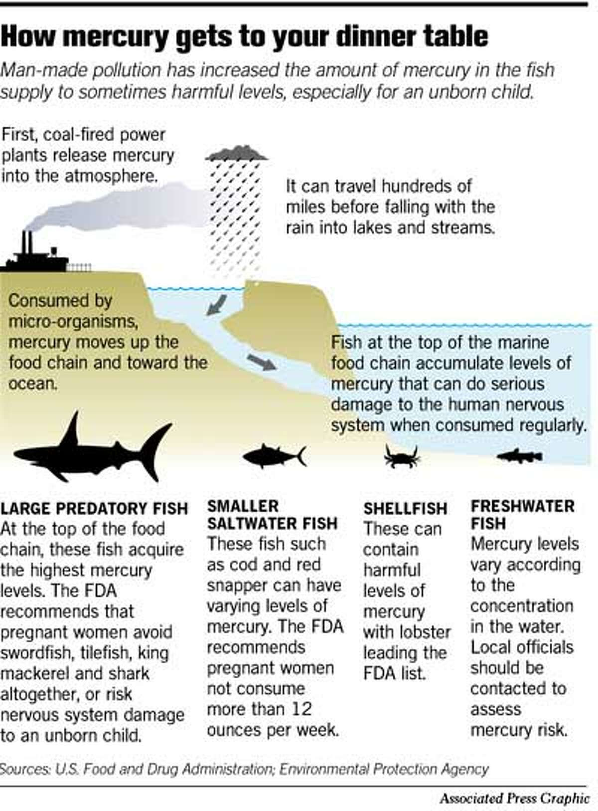 How Mercury Gets to Your Dinner Table. Associated Press Graphic