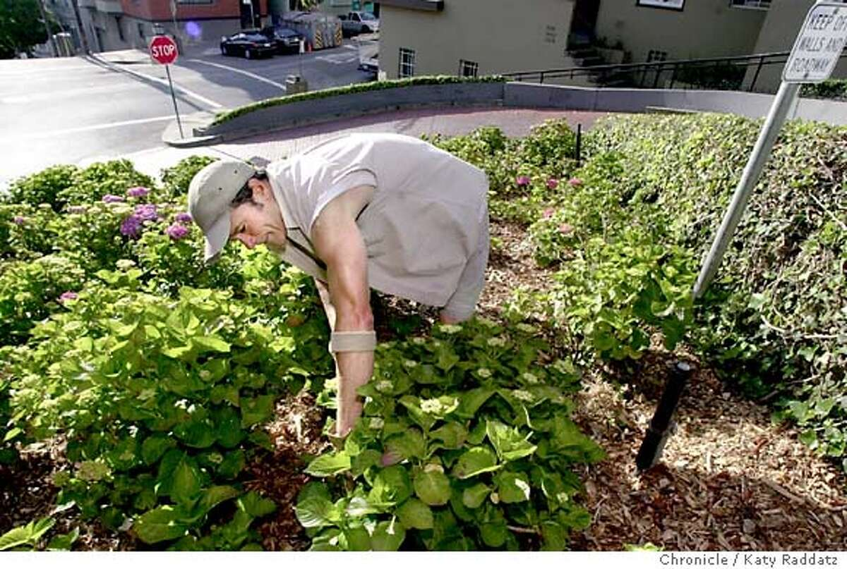 SHOWN: John Smith, the gardener for the crooked part of Lombard St. carefully weeds the hydrangea bed. John Smith retired as a Schwab director last year to become the gardener in charge of the crooked part of Lombard St. Ben Pimentel writes for Business section. Katy Raddatz / The Chronicle
