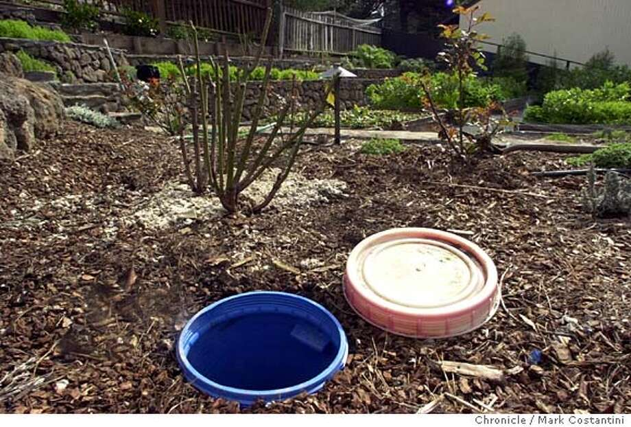 GRAYWATER13_019.JPG Photo taken on 3/6/04 in {location}.  Story is about graywater -- collecting laundry and shower water to use on landscaping. Wendy Tokuda Hall has a graywater system in place at her Oakland home. This is the system's the 5-gallon catch basin in the garden. These are photos to go on the jump page with the story, which will be illustrated with a how-it-works graphic. Chronicle Photo by Mark Costantini Photo: MARK COSTANTINI