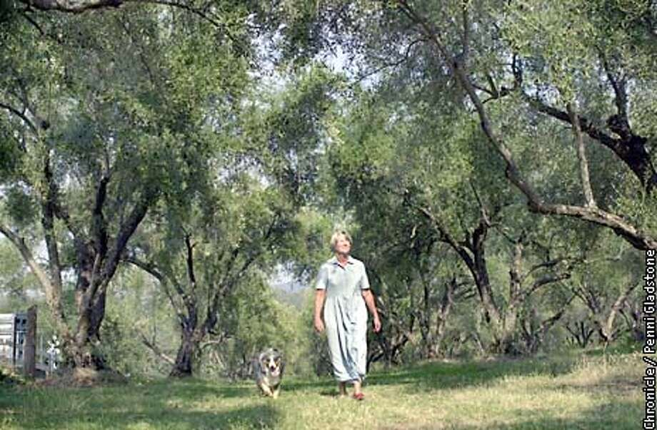 Olive Farmer Gale Johansson, walks thru a canopy of Olive Trees with her pet dog. california's boutique olive oil farmers, are under siege from the dreaded olive fruit fly.  SAN FRANCISCO CHRONICLE PHOTO BY PENNI GLADSTONE Photo: PENNI GLADSTONE
