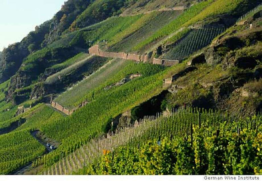 Riesling vineyards in Germany's Rheingau region produced fruity wines with firm acidity in 2002. Photo courtesy of the German Wine Institute